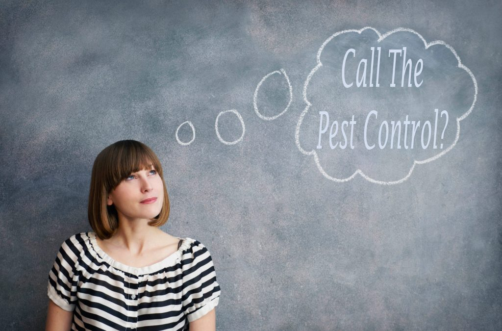 Should you Consider Calling the Pest Control?