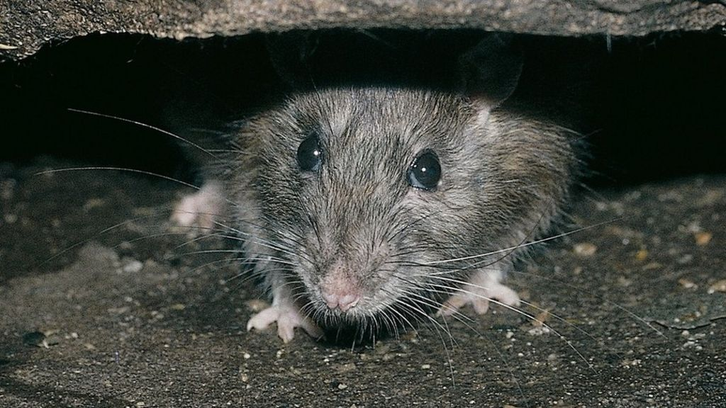 What is Rodent Control